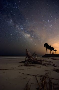 The Milky Way rises over the beach and ocean at Sea Island, Georgia. The palm trees on the right are along the cart path between the 17th and 18th holes at Ocean Forest, Sea Island, which is one of the top 100 golf courses in the world.