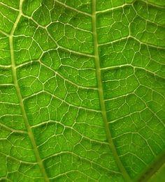 microscopic leaf - Google Search