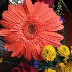 #Ostara Blessings & Happy #Spring #Equinox #firstdayofspring #balance #harmony #spirals #sacredgeometry #naturesmagic