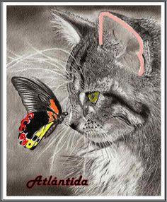 La mariposa y el gato