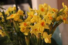 Isles of Scilly Narcissi by Libertylondongirl,