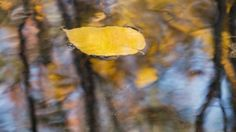 """Peaceful Music, Relaxing Music,  Instrumental Music, """"Cozy Autumn"""" By Tim Janis - YouTube"""