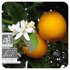 Orange douce bio Pranarôm - Huile essentielle citrus sinensis - les-huiles-essentielles-bio