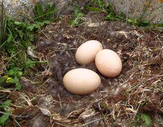 Resultado de imagen para nido churrin del sur