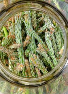 Syrop z pędów sosny II przepis | Sprawdzona Kuchnia Health And Beauty Tips, Health Tips, Home Remedies, Natural Remedies, Polish Recipes, Health Eating, Green Beans, Brunch, Food And Drink