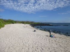 Join an inspiring project helping with conservation volunteering in the Galapagos. Spend 1 - 3 weeks preserving fauna and flora on a stunning island. Galapagos Islands, Gap Year, Beautiful Beaches, Conservation, Flora, Water, Outdoor, Gripe Water, Outdoors