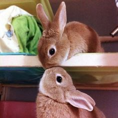 Bunny Love bethkcox