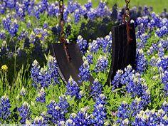 Swing in the Bluebonnets...Prairie Mountain, TX