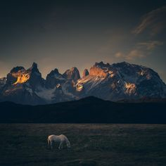 ***CLICK IMAGE*** January 20, 2016 - Horse grazing, Torres del Paine, Patagonia…