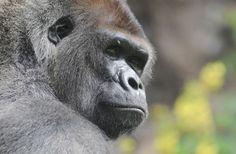 En moins de 50 ans, la moitié des animaux sauvages a disparu