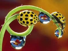 I don't know if those are real water droplets with a flower's reflection or not, but it looks so neat!
