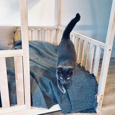 Cat life 😍 #toddlerlife #toddlerbedroom #toddlerbed #kids #kidsroom Twin Size Toddler Bed, Pink Toddler Bed, Toddler Bed Frame, Buy Bed Frame, House Frame Bed, Play Beds, Kid Beds, Wood Nursery, Nursery Bedding