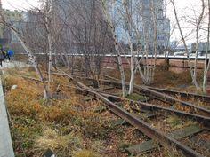 """Deze vervallen spoorbaan in hartje New York City is omgetoverd tot landschapspark. Zulke plaatsen die hun oorspronkelijke functie hebben verloren bieden veel mogelijkheden om ontmoetingsplaatsen te worden. Zo worden zij """"teruggegeven"""" aan de bewoners van de stad."""