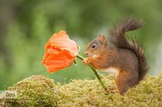 flower present by geertweggen. Please Like http://fb.me/go4photos and Follow @go4fotos Thank You. :-)