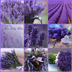 Collage by Miss Lily Bliss Lavender Cottage, Lavender Blue, Lavender Fields, Lavender Flowers, Purple Flowers, Purple Love, All Things Purple, Purple Lilac, Shades Of Purple