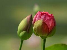 Cómo evitar la caída de los capullos florales