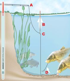 How to fish the lift method for carp, tench and bream