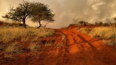 Namibia Africa Hills Grass