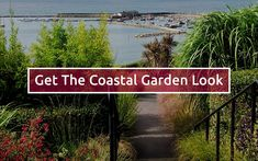 Relaxed coastal gardens are known for their silvery foliage, grassy greens and bright flowers. The plants are full of colour, texture and movement, and they bring a sense of wilderness and freedom. But you don't need sea views to get that fun, informal look in your own outdoor space. Most coastal plants