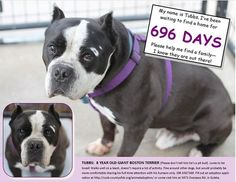 9/2 STILL THERE!!! PLEASE SAVE!!! Dog abandoned outside of shelter is still there, 696 days later