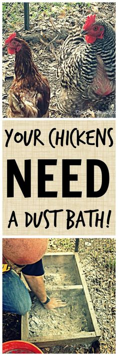 Building a Chicken Dust Bath