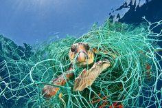 marine debris   foto: brian skerry The second most common danger to sea turtles, after predator attacks, is marine debris.