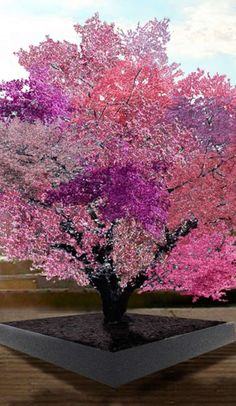 The world's most amazing tree is growing 40 DIFFERENT kinds of fruit