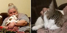 Tailless Cat Insists To Be With Sad Grandma Who Never Liked Cats, It Changes Her Life