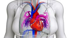 Prevent Mitral Valve Prolapse Progression and Protect Your Heart Mitral Valve Prolapse, Open Heart Surgery, Heart Rhythms, Protect Your Heart, Icu Nursing, Heart Health, Physiology, Pumps, Natural Healing