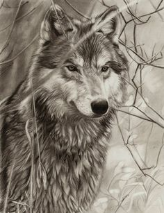 Awaiting Wolf by ~AmBr0 on deviantART ~ traditional pencil art