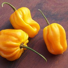 """Habanero Golden (Yellow). 150,000 - 325,000 Scoville Units. Capsicum Chinense. The Golden Habanero is high yielding and the plant will grow about 30"""" high (75 cm). The yellow habañero chile pepper is characteristically lantern-shaped. Varying from green and yellow to red and reddish-purple, this hot little pepper is about 1"""" to 2.5"""" long and 1"""" to 2"""" in diameter."""