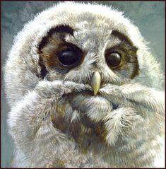 The Art of Robert Bateman - a moment of silence to reflect on all the great paintings Robert Bateman has brough to our lives.
