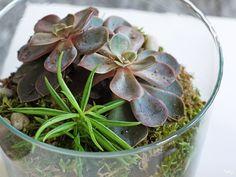Un terrarium facile et pas cher
