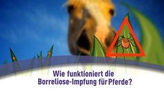 Wie funktioniert die Borreliose-Impfung für Pferde?