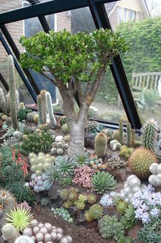 Jan Luebbers It's hard to believe that it's over ten years since I took these pictures of a spectacular garden in the Netherlands. I wa. Succulent Landscaping, Succulent Gardening, Cacti And Succulents, Planting Succulents, Garden Landscaping, Cactus House Plants, Jade Plants, Cactus Cactus, Indoor Cactus