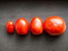 The Best Fresh Tomato Sauce Recipe Fresh Tomato Sauce Recipe, How To Make Tomato Sauce, Fresh Tomato Recipes, Tomato Pasta Sauce, Pasta Sauce Recipes, Homemade Tomato Sauce, Spaghetti Sauce, Marinara Sauce, Tomato Paste