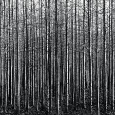 trees by thespeak on Flickr.