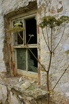 Abandoned Houses, Abandoned Places, Old Houses, Abandoned Castles, Abandoned Mansions, Haunted Places, Old Windows, Windows And Doors, Grange Restaurant