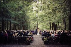 Quaker wedding in the woods