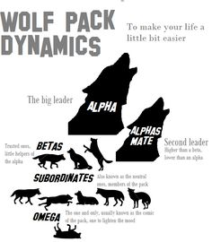 Wolf Pack Dynamics::If people adopted this philosophy in their families, life might actually work out in the positive. What a concept. Tier Wolf, Of Wolf And Man, Wolf Hybrid, Funny Animals, Cute Animals, Wild Animals, Baby Animals, Wolf Stuff, Wolf Love
