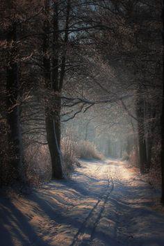 B / Winter / snow / landscape / lovely / neige light / mysterious Beautiful World, Beautiful Places, Beautiful Pictures, Foto Picture, Winter Szenen, Winter Road, Winter Walk, Winter Night, Snow Scenes
