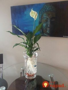 use a vase, rocks, and a peace lily cleaned of all soil as a beautiful display for a beta fish! Indoor Water Garden, Indoor Plants, Betta Fish Tank, Beta Fish, Types Of Houseplants, Aquaponics Fish, Peace Lily, Paludarium, Fish Ponds