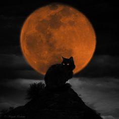 Black cat on a full moon Halloween Images, Halloween Cat, Holidays Halloween, Haunted Halloween, Halloween Night, Happy Halloween, Samhain, I Love Cats, Crazy Cats