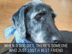 These are examples of pet loss sympathy messages that you can use to write in a card for someone you know whose pet has died.  Personalize these by adding specific details about the pet.