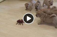 ¿Crees que estos adorables cachorros derrotarán a la araña robot? ¡Son tan lindos de ver! Pilates, Yoga, Gym, Education, Fitness, Exercises, Bracelets, Stretching Exercises, Stretches