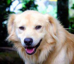 Ebbene si, è un dato di fatto: il vostro adorabile cucciolo è diventato un signor cane adulto.