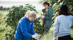 Volunteer in New Zealand with the world's affordable & trusted volunteer company. International Volunteer HQ's wide range of projects include Coastline Conservation ...