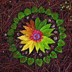 Acharya Judy Lief, plant mandala Inspiring Quotes about the Sacredness of Seeds, by Dr. Vandana Shiva