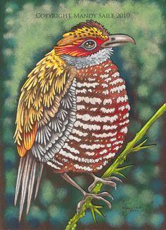Beautiful Bird 15 PRINT by BijousWhimsy on Etsy