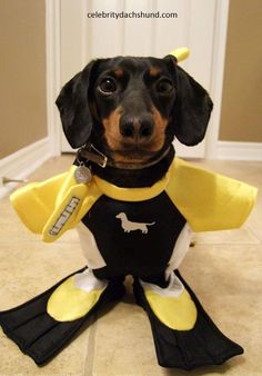 Jacque Crusoe! HAHAHA!!! This would be perfect for our river dog! @cswagner03 totes for DOZER!